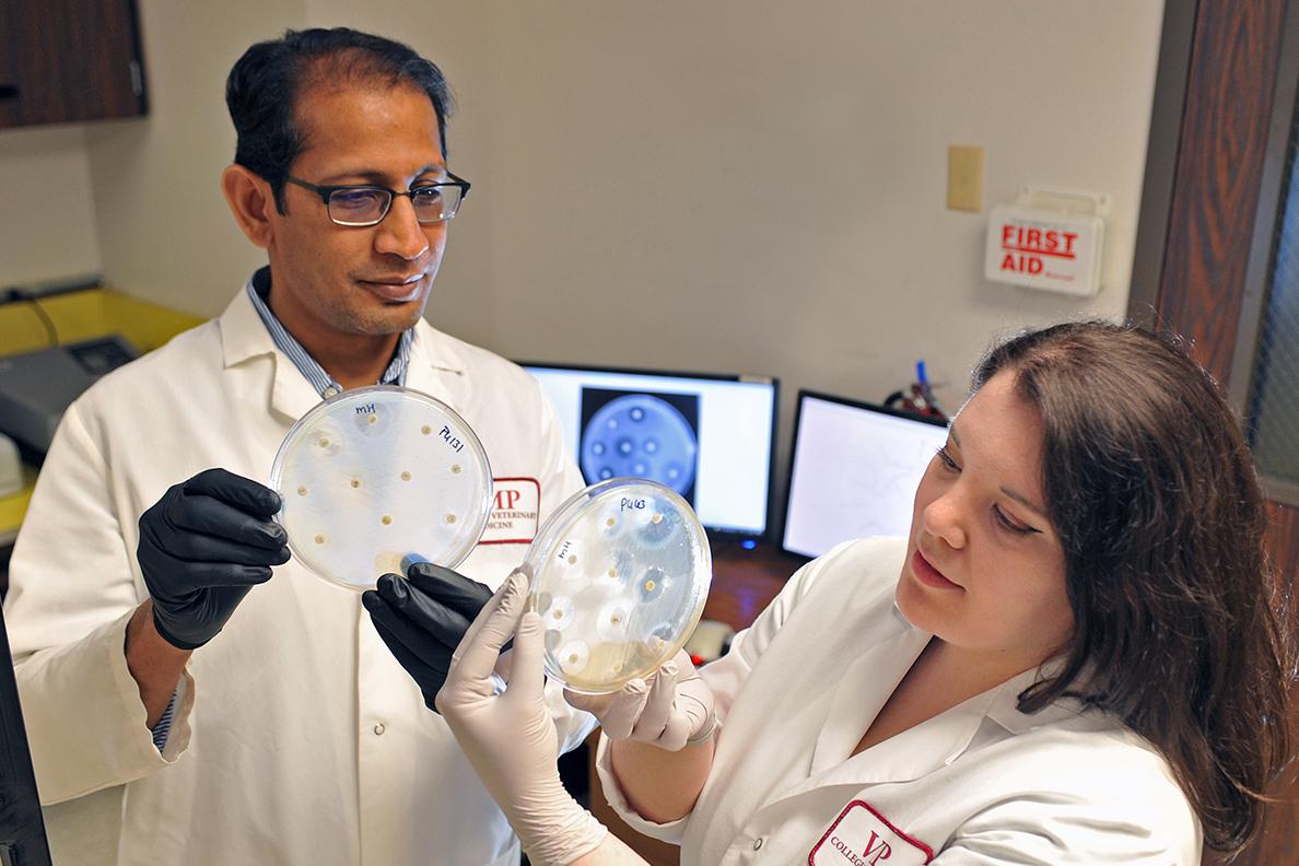 Devendra Shah and Rachel Soltys examine disease samples