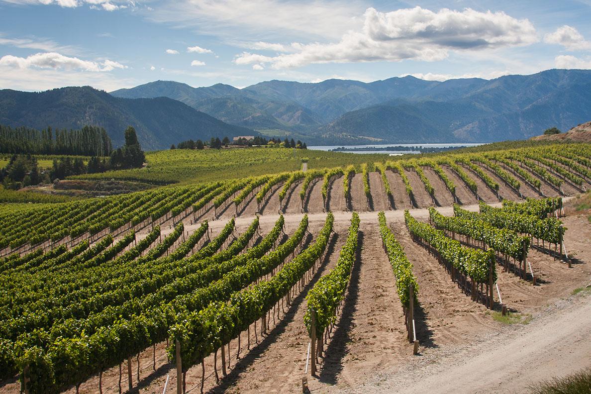 Vineyards found along the shores of Lake Chelan.