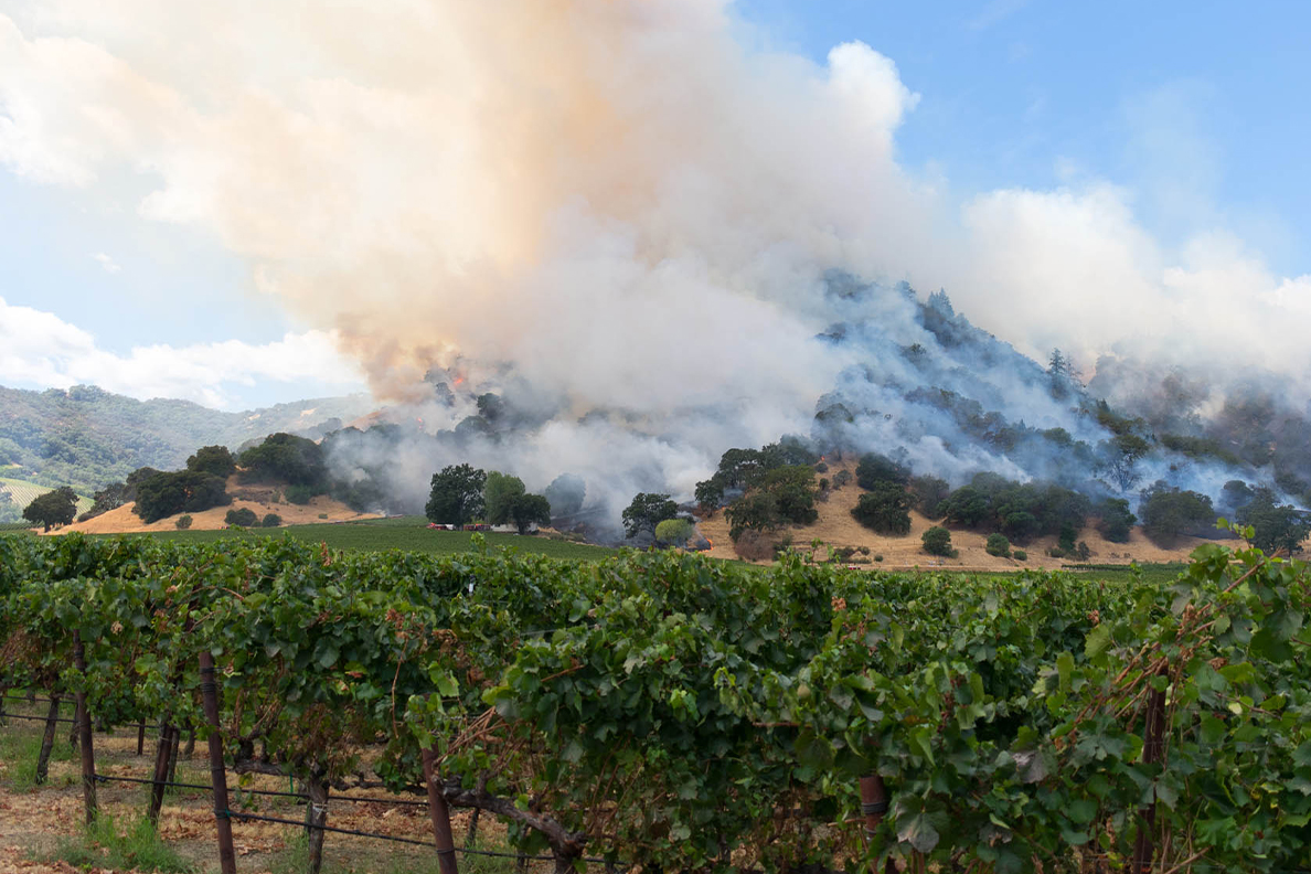 A wildfire burns a wine orchard in the Pacific Northwest.