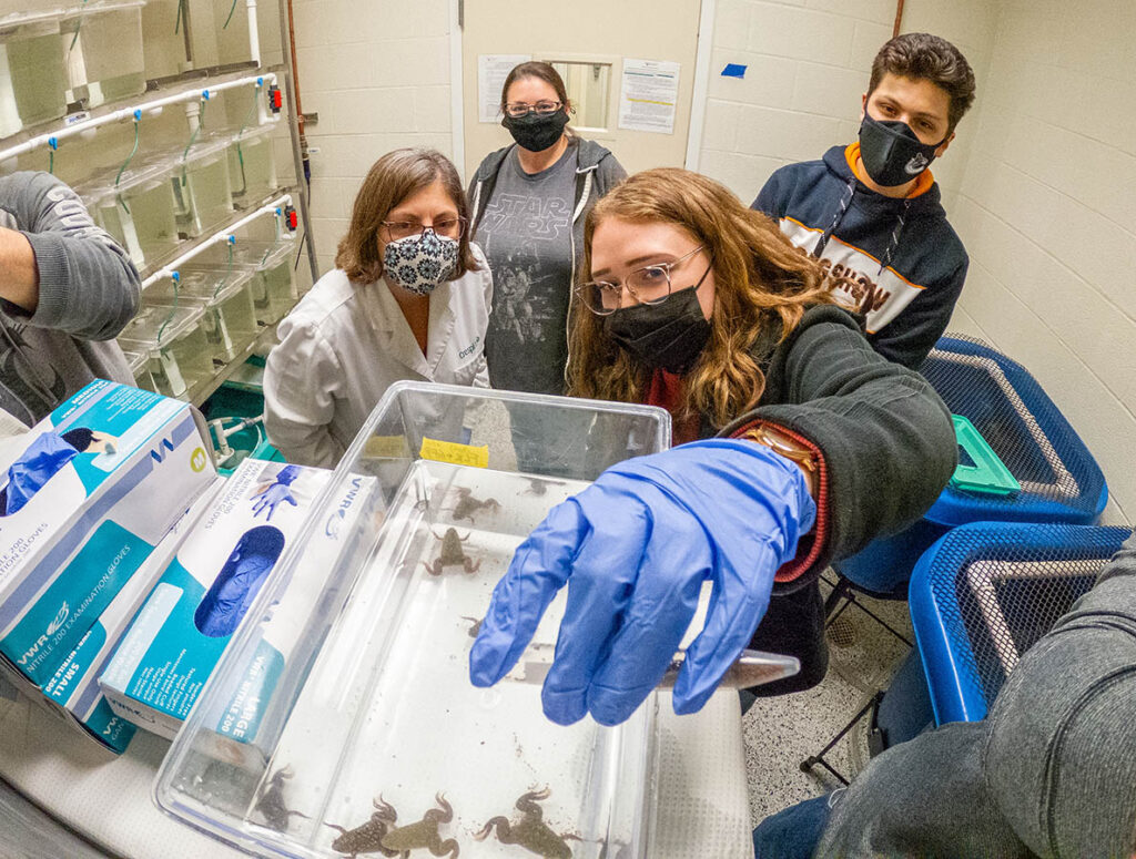 A student wearing a purple glove reaches up to a tank with frogs in it, while other researchers look on.