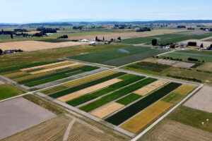 Findings from experimental plots at Mount Vernon Long Term Agroecological Research and Extension project will help inform sustainable soil management practices.