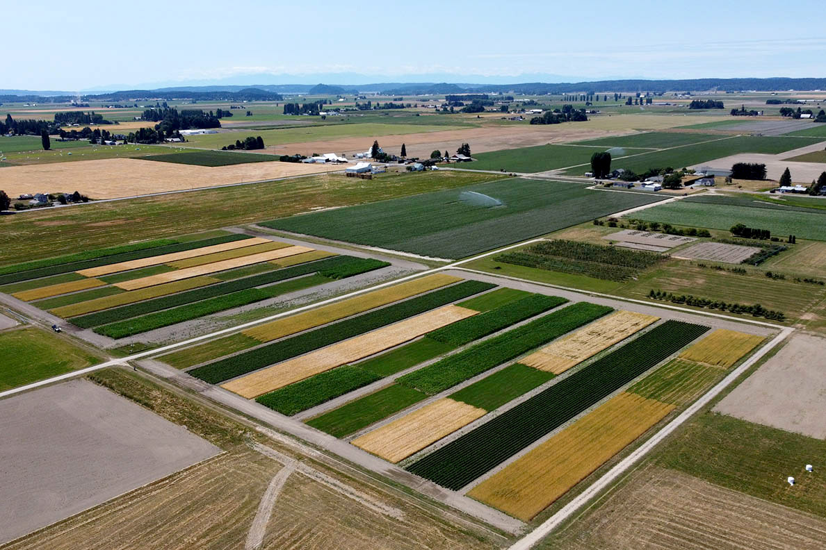 An aerial view of rectangular green and yellow fields.