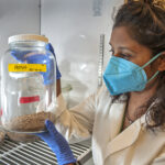 Professor Viveka Vadyvaloo holds a flea colony in a jar