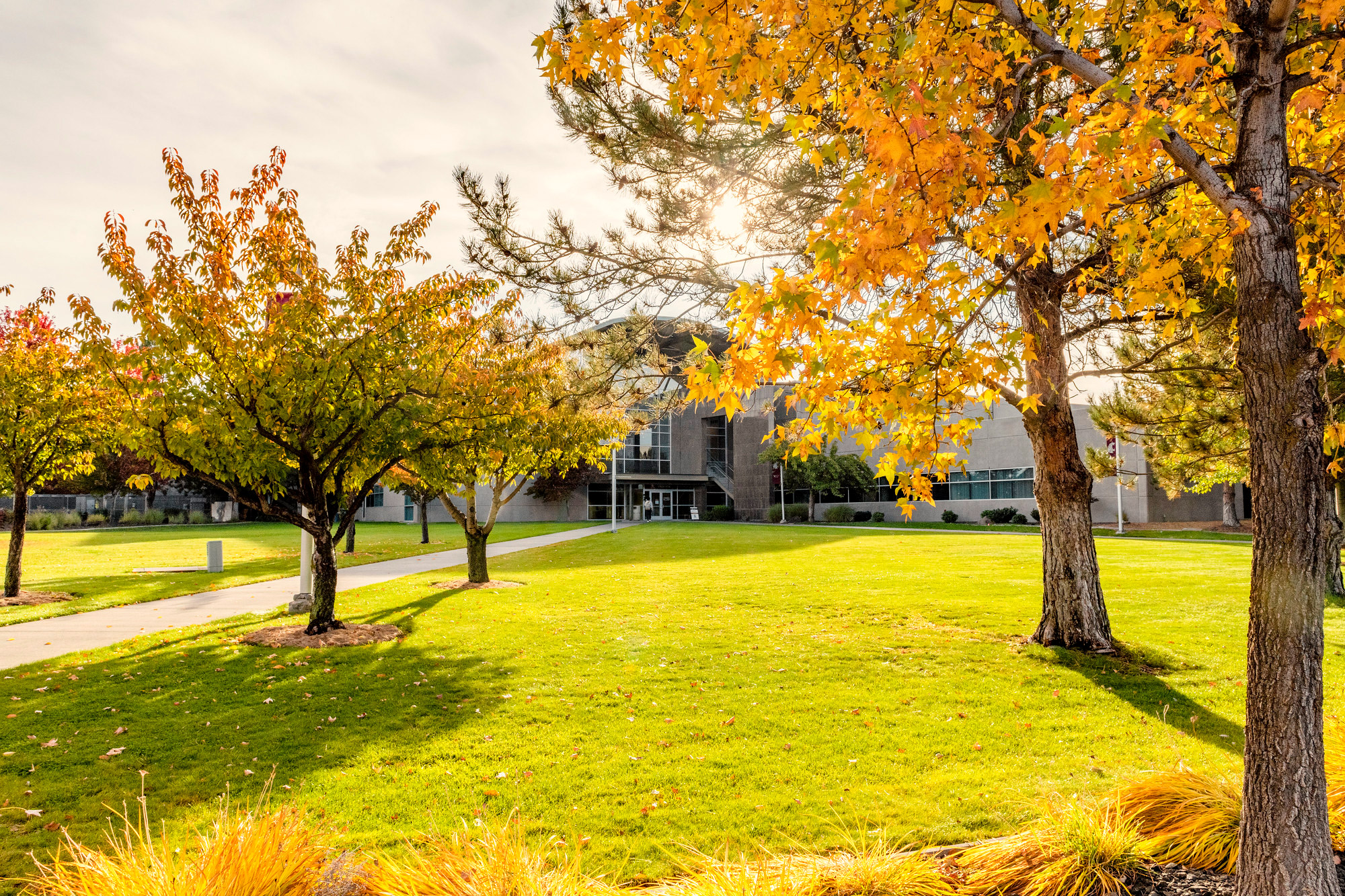 A view of the lawn, trees, and buildings on the WSU Tri-Cities campus.