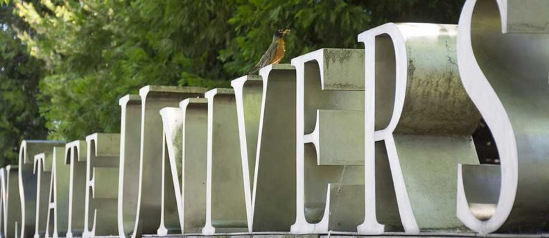 Photo of a robin perching on the Washington State University sign at the edge of campus