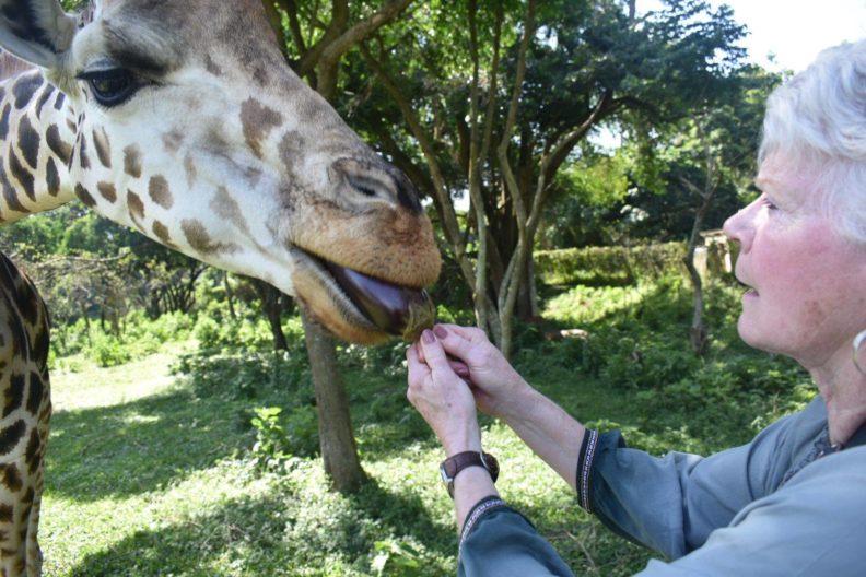 Dr. Anita Hunter feeds a giraffe at an animal sanctuary in Uganda, Africa.