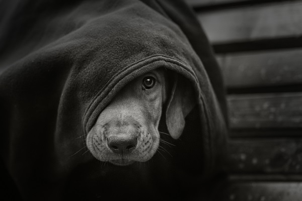 Stock art of puppy under a blanket.