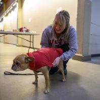 Anne Mason trying coat on a dog