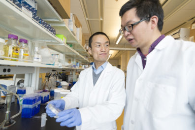 Senior author and assistant professor Zhaokang Cheng discusses an experiment with first author and postdoctoral research fellow Peng Xia.