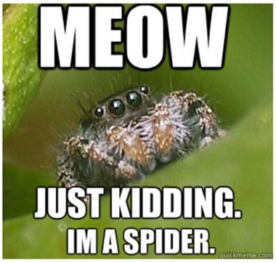 Meow ~ Just Kidding I'm a Spider quickmeme.com/meme/rxp