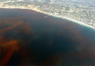Dead zone off the coast of La Jolla, San Diego, Calif., USA. Photo: Alejandro Díaz and Ginny Velasquez on Wikipedia