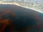 Ocean dead zone