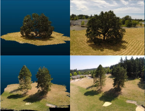 Real trees are on the right. Trees on the left were made using imaging data collected by aerial drones and the LES forest simulator.