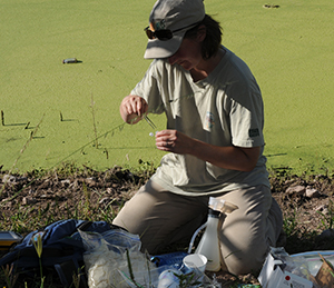 Caren Goldberg collects a water sample in Arizona to analyze for eDNA of Chiricahua leopard frogs.