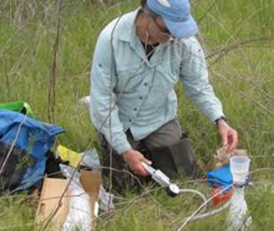 Katherine Strickler collects a water sample in Florida to analyze for eDNA of reticulated flatwoods salamanders.