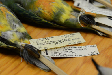 hand-written labels attached to the legs of collected birds