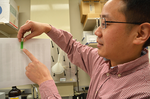 Ming Xian holds a green liquid that is the solution of a new fluorescent sensor for H2S.