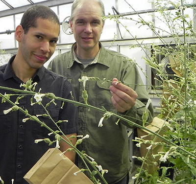 David Gang, right, and Korey Brownstein examine plants to be harvested and burned in replica pipes.