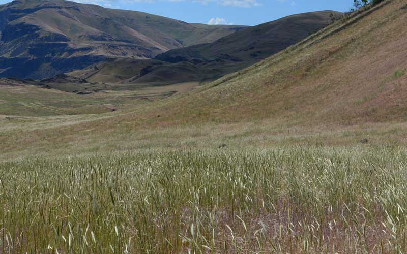 Native grasses one year after a fire