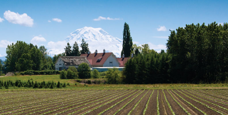 Farm field with old white barn and Mount Rainier in background.