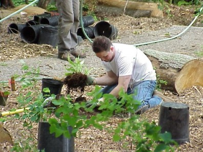 Removing potting soil prior to installation, which will reduce soil interface problems and enhance plant establishment.