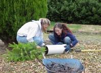 Planting trees.