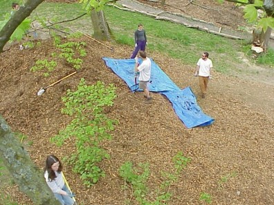 Aerial views of the freshly mulched site.