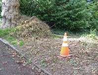 Stacks of weeds awaiting composting.