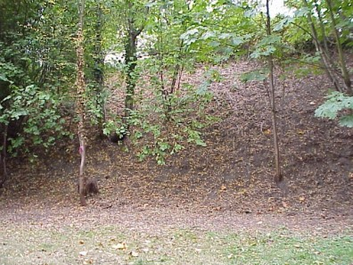 The slope following invasive removal by Friends of Frink Park and other volunteers.
