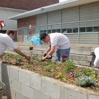 Mulching the newly installed plants.