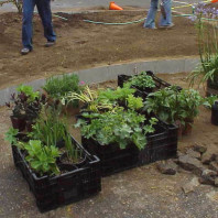 Plants to be installed on the site.