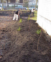 The newly planted mounds.
