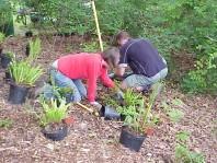 Installing new plants.