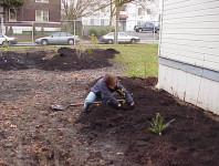 Installing more plants.
