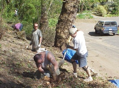 Cutting stumps of removed shrubs to the ground. The roots will be left to hold the soil in place.