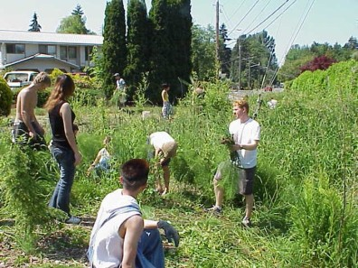 Several students work to clear grasses from swale bank.