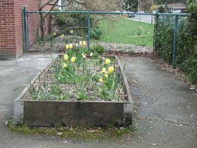 Spring-flowering bulbs in the raised bed.