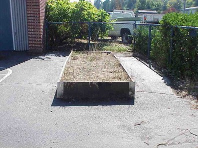 The raised bed prior to rehabilitation and replanting.