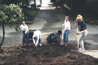 Horsetail removal and soil preparation (May 6, 1999).