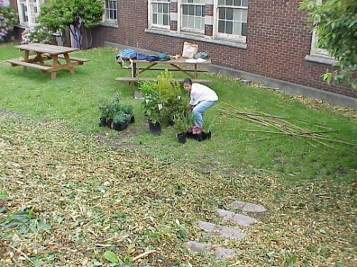 Preparing plants for installation in the freshly mulched site.