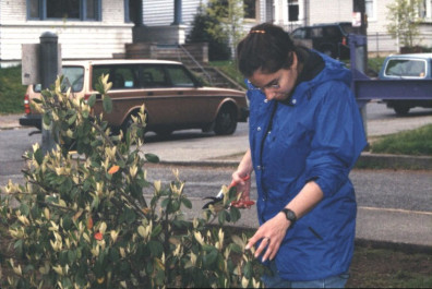 Restoration pruning of existing vegetation (May 6, 1999).