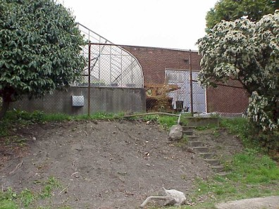 The site following ivy removal.