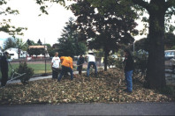Mulching with wood chips (May 6, 1999).