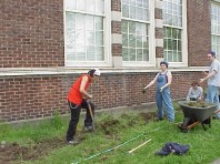Removing turf to both reduce resource competition and expand the planting bed.