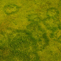 Turfgrass with damage apparent