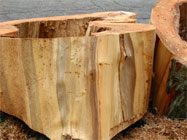 Cut section of hollow trunk