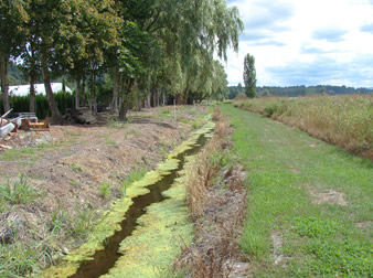 Drainage water