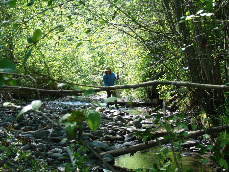 Stream monitoring for Phytophthora