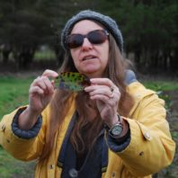 Marianne inspecting a Pacific madrone leaf