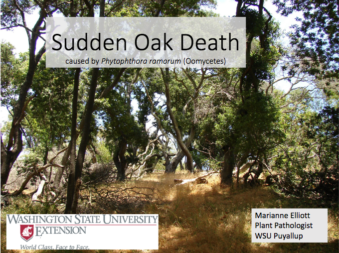 Sudden Oak Death Presentation Link